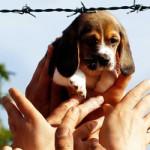 beagle01g_1