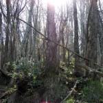 bosco ceduo
