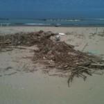 spiaggia legname
