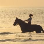 cavallo mare