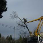 taglio piante strada