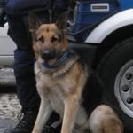 pando cane antidroga polizia