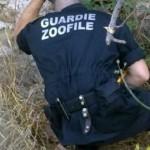 guardie-zoofile