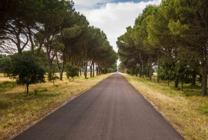 Agesci Toscana - San Rossore