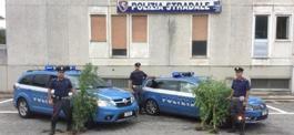polizia mariuana lerici