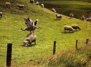 lupo agnelli