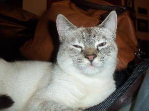 eris gattina arianna
