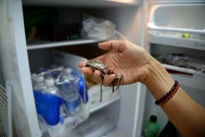 gioielli frigorifero